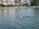 Bodenseeequerung-Bodenseeboot-Juergen-G-220719-Bodensee-Community-SEECHAT_DE-P1050117.JPG