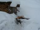 Schlittenhunderennen-Todtmoos-20100131-Bodensee-Community-seechat_de-IMG_8481.JPG