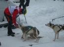 Schlittenhunderennen-Todtmoos-20100131-Bodensee-Community-seechat_de-IMG_8489.JPG