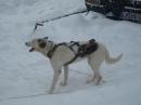 Schlittenhunderennen-Todtmoos-20100131-Bodensee-Community-seechat_de-IMG_8490.JPG