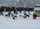 Schlittenhunderennen-Todtmoos-20100131-Bodensee-Community-seechat_de-IMG_8491.JPG