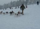 Schlittenhunderennen-Todtmoos-20100131-Bodensee-Community-seechat_de-IMG_8492.JPG