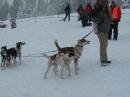 Schlittenhunderennen-Todtmoos-20100131-Bodensee-Community-seechat_de-IMG_8493.JPG