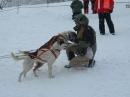 Schlittenhunderennen-Todtmoos-20100131-Bodensee-Community-seechat_de-IMG_8494.JPG
