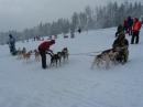 Schlittenhunderennen-Todtmoos-20100131-Bodensee-Community-seechat_de-IMG_8495.JPG