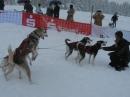 Schlittenhunderennen-Todtmoos-20100131-Bodensee-Community-seechat_de-IMG_8501.JPG