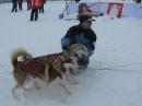 Schlittenhunderennen-Todtmoos-20100131-Bodensee-Community-seechat_de-IMG_8502.JPG