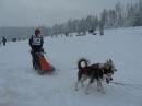 Schlittenhunderennen-Todtmoos-20100131-Bodensee-Community-seechat_de-IMG_8504.JPG