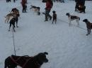 Schlittenhunderennen-Todtmoos-20100131-Bodensee-Community-seechat_de-IMG_8507.JPG