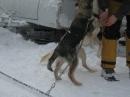 Schlittenhunderennen-Todtmoos-20100131-Bodensee-Community-seechat_de-IMG_8515.JPG