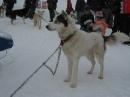Schlittenhunderennen-Todtmoos-20100131-Bodensee-Community-seechat_de-IMG_8519.JPG