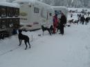 Schlittenhunderennen-Todtmoos-20100131-Bodensee-Community-seechat_de-IMG_8520.JPG