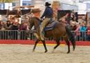 Pferd-Bodensee-2010-280210-Die-Bodensee-Community-seechat_de-_04.jpg