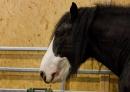 Pferd-Bodensee-2010-280210-Die-Bodensee-Community-seechat_de-_06.jpg