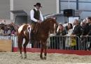 Pferd-Bodensee-2010-280210-Die-Bodensee-Community-seechat_de-_19.jpg