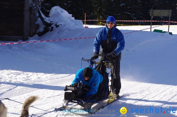Schlittenhunderennen 2012: Bernau im Schwarzwald, 04.02.2012