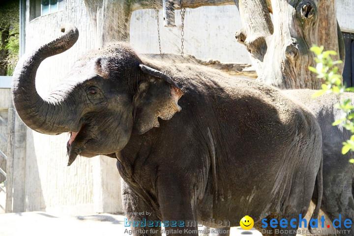 Zoo-Z_rich-26042012-Bodensee-Community-Seechat-de9.jpg