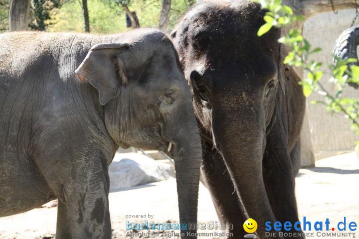 Zoo-Zuerich-26042012-Bodensee-Community_SEECHAT_DE-_98.jpg