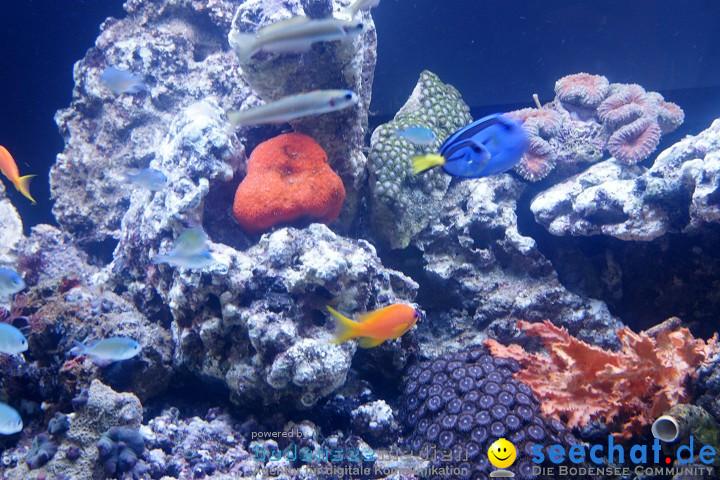 Aqua-Fisch 2009